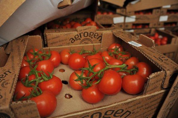 Под Смоленском задержали 21 тонну томатов споддельными документами